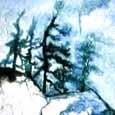 Pines1T