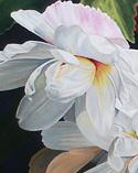 Begonia Painting