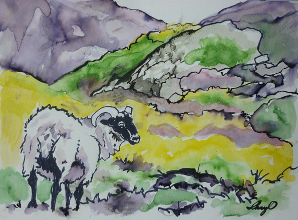 Ireland-sheep